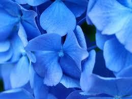 blue flowers&amph94&ampw125&ampusg  sh7vFGk2zOiWh8CT4E5poAv0Sro